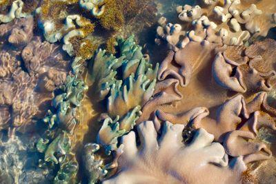soft coral assortment