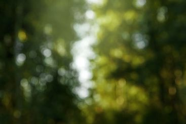 Abstract, blurred background of green nature, beautiful...