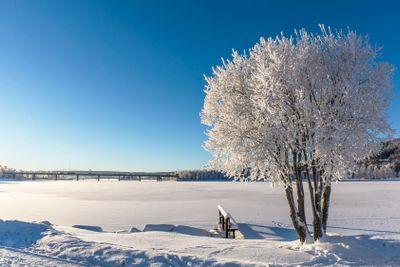 Frozen tree in sunshine