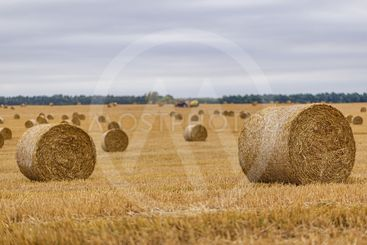 Hay roll on a meadow against a cloudy sky on a long...