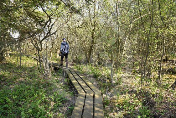 Naturfotograf på en spång i ett naturreservat
