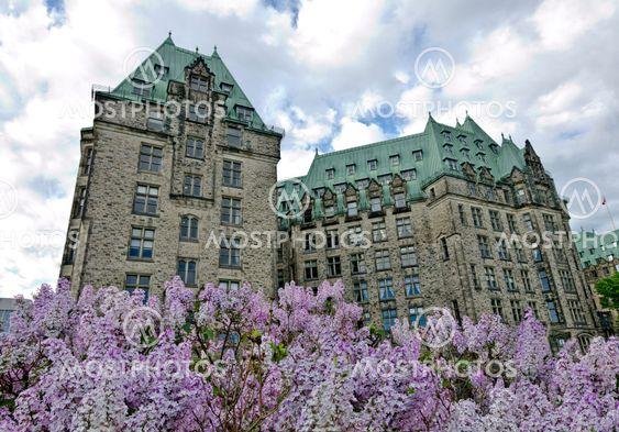 Lilacs at Confederation