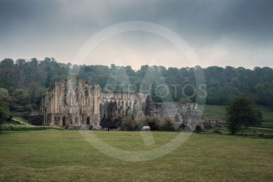 11th Century Rievaulx Abbey in North York Moors