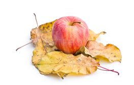 autumn apple and leaves