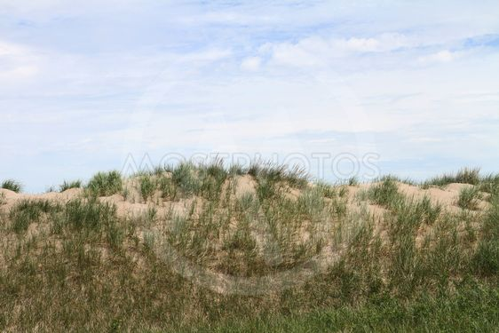 Sand dune with grasses