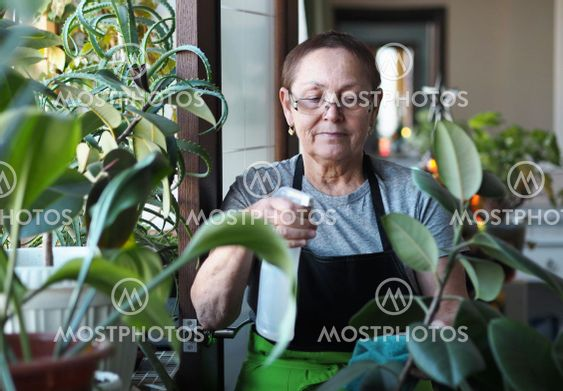 Plant growing and horticulture.An elderly woman watering...