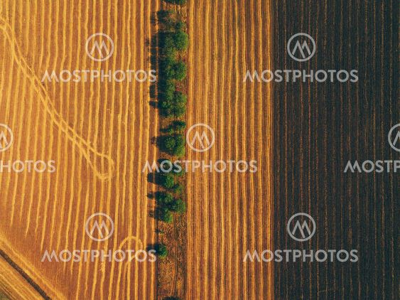 Aerial top view photo of trees standing in line near...