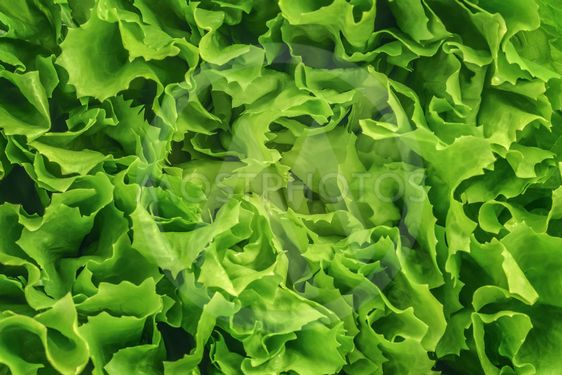 lettuce salad background texture