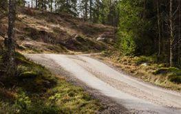 Slingrande skogsväg genom en granskog