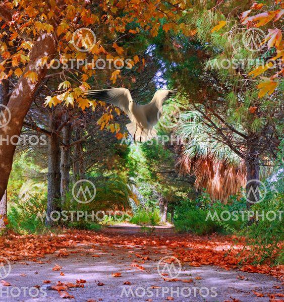 Farverige træer i efteråret/efteråret