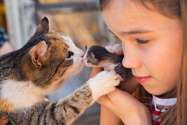 newborn kitten in hands of a kid girl. Mama cat.
