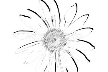 Petals with effect,digital painting.