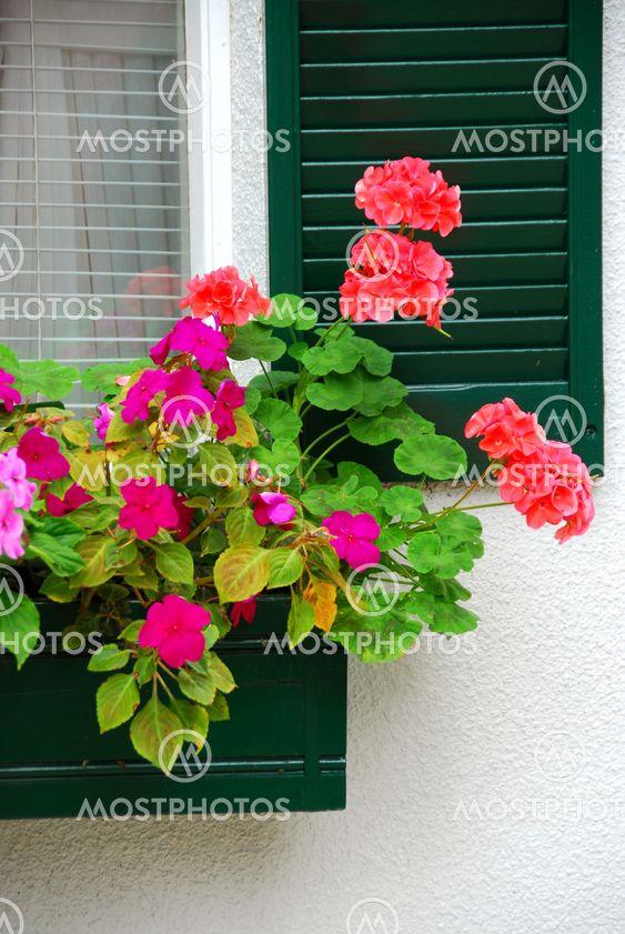 House flower box