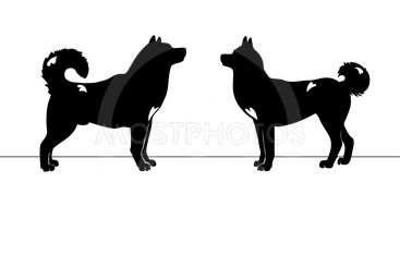 Two dogs love silhouettes
