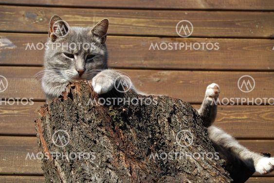 Katt på bålen