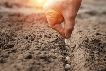 Close up of farmer's hands, planting seeds in spring....