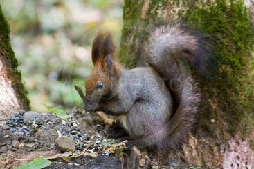 squirrel standing between ferns and leafs