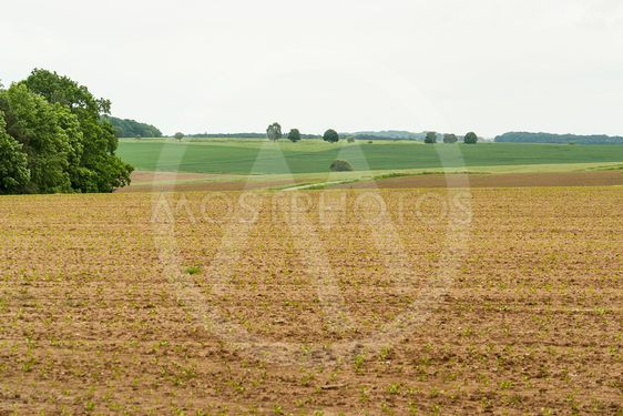 agricultural scenery