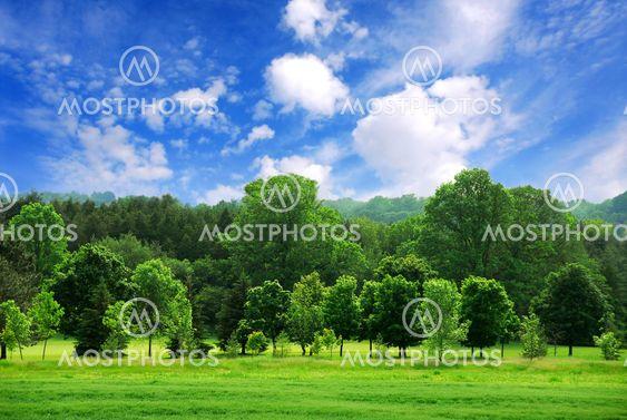 Grøn skov