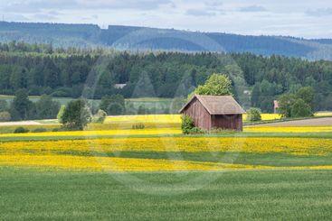 Early summer in Sweden