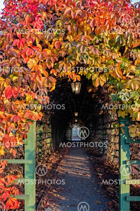 Tunnel of leaves.