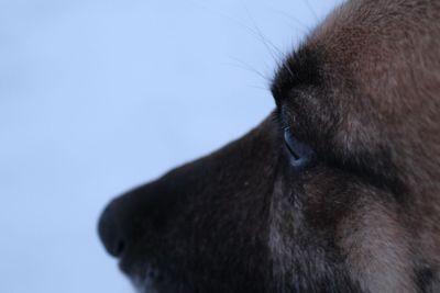 dog, dog muzzle, eyes, eyes