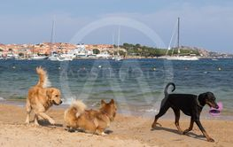 Group of dogs playing with frisbee on dogs friendly...