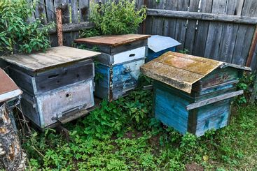 Old empty beehives in the garden near the fence