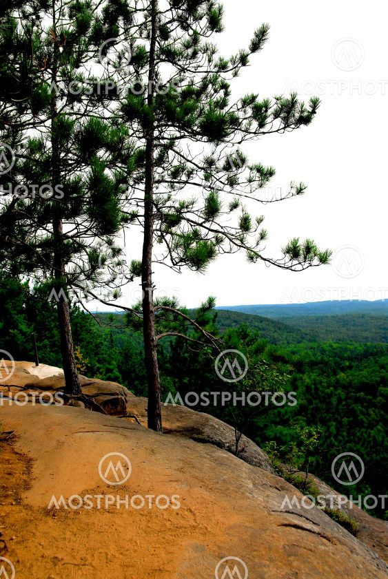 Pines on cliffs