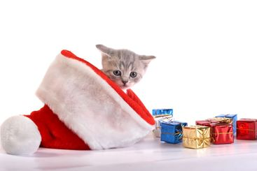 The kitten plays with gifts