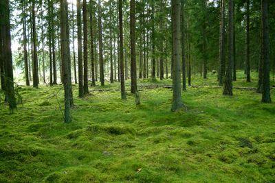 Wald | wood