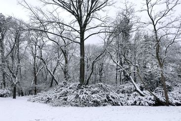 Shot of winter and snow-covered trees