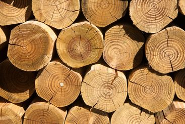 Close up of a stack of cut logs.