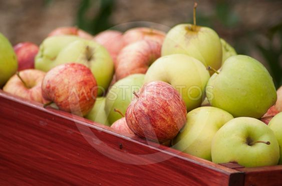 organic apple pile in a  wooden box