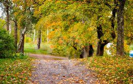 löv på stig