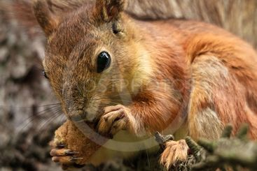Squirrel with Bread Crust