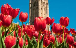 Peace Tower with red tulips