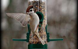 Småfågel