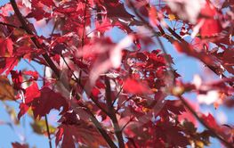 Leaves have changed colors