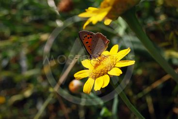 Butterfly on the flower 6