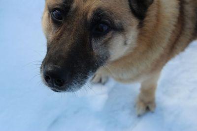 dog, canine, pet, snow,