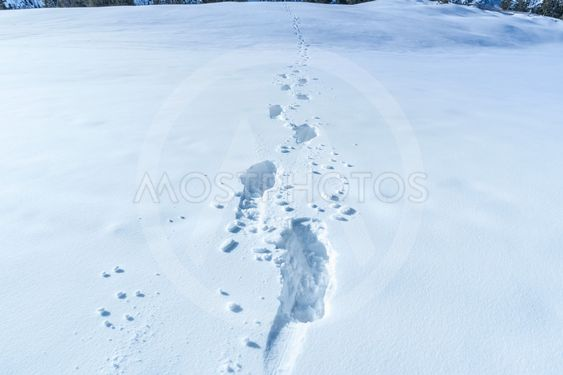 Winter scene with footsteps in the snow