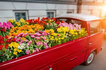 Car loaded with flowers