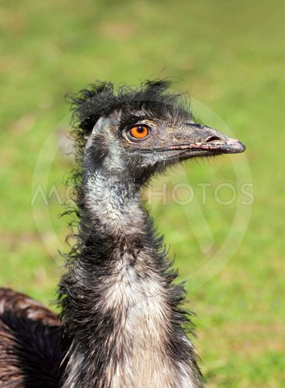 bizarre ostrich bird head