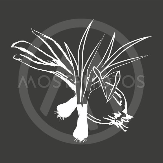Leek Bunches and Bulb Onion Isolated White Outline