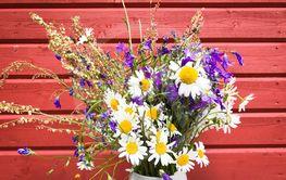 Blommor i sommarljus