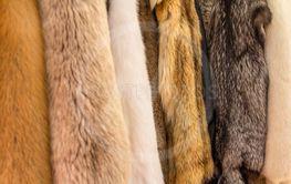 fur variation