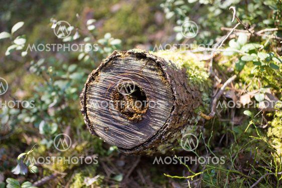 Log with Moss