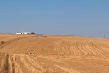 Freshly picked dry cereal field in Andalusia