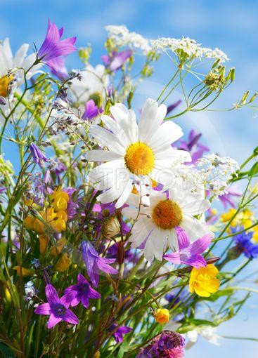 summer flowers in sunshine